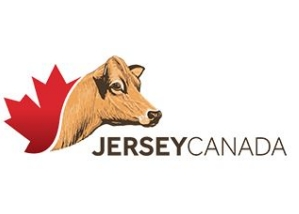 Jersey Cattle Canada